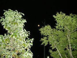 お月見2.jpg